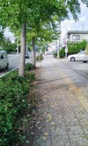 200809-ginnan.jpg